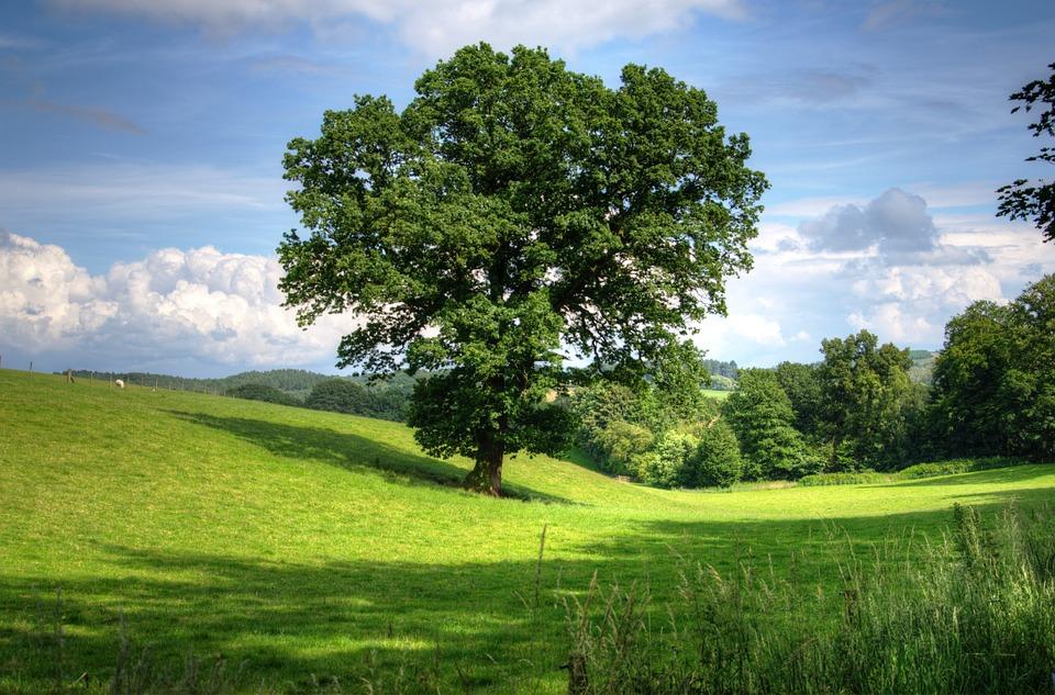 Why Oak?